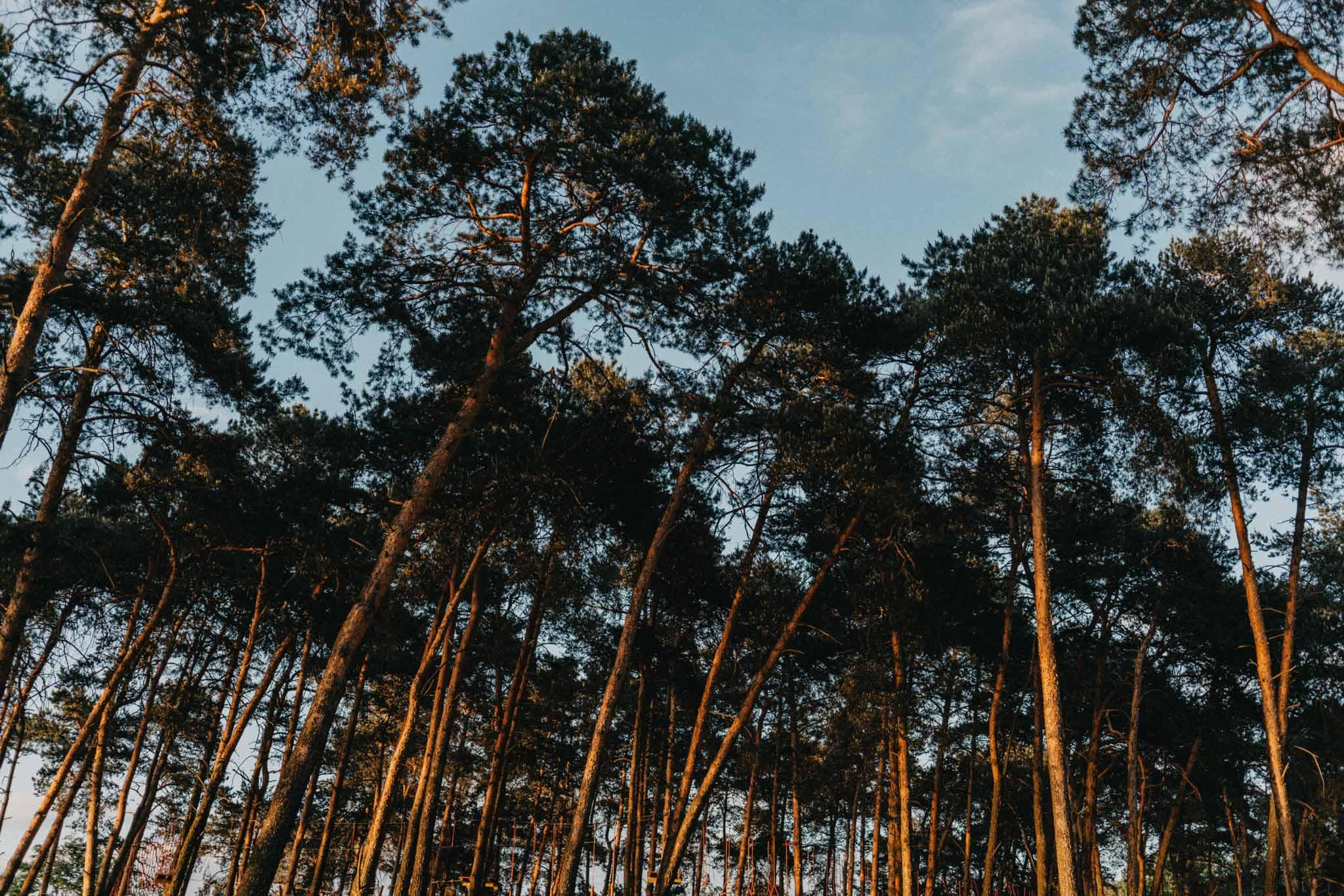 Sesja zaręczynowa w Ogrodzie Brzoskwinia | Zdjęcia narzeczeńskie w Ogrodzie Brzoskwinia